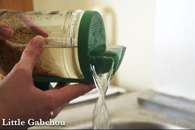 rinçage graines germées