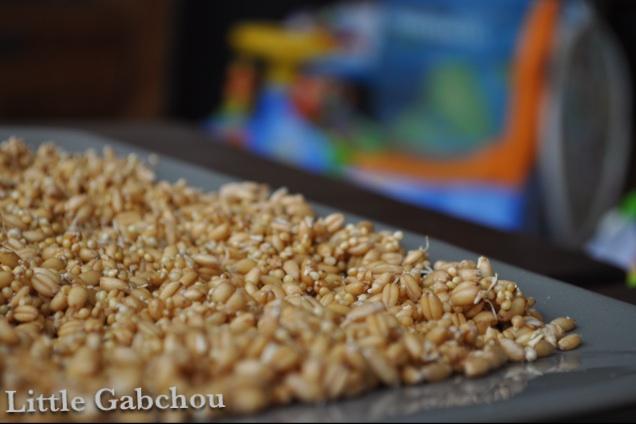 graines germées céréales faites maison pour bouillie bébé