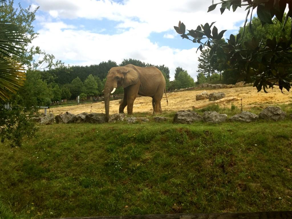 Eléphant zoo Beauval sortie avec enfant de 2 ans