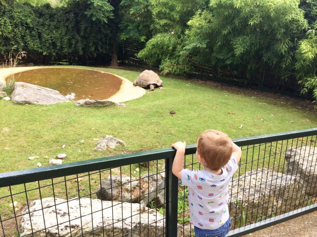 idée sortie avec un enfant de 2 ans zoo Beauval