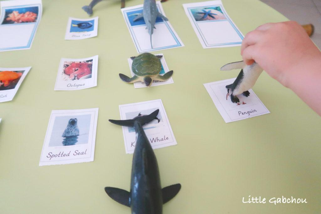montessori cartes de nomenclature animaux mer a imprimer