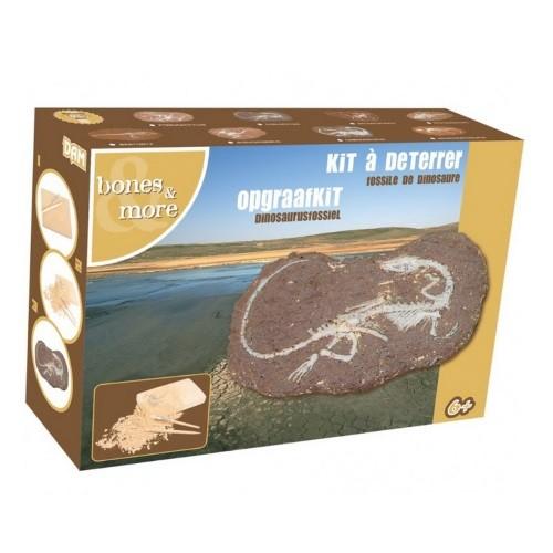 kit fossile_dinosaure idee cadeau enfant