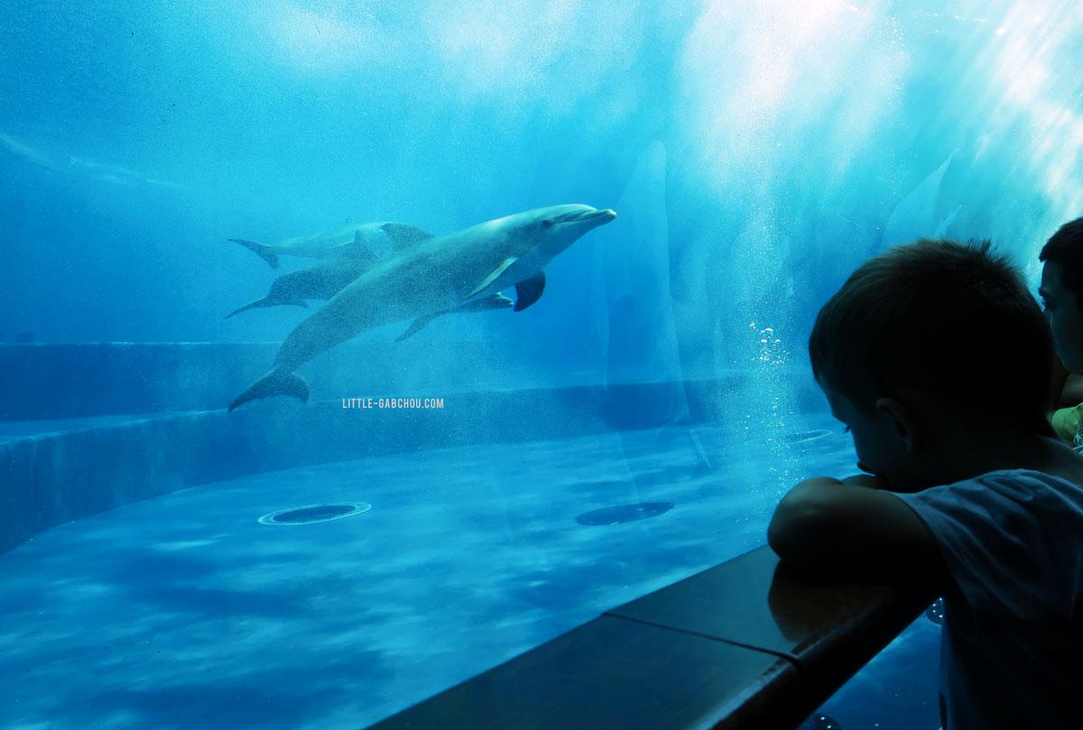 dauphins dans aquarium de Gênes