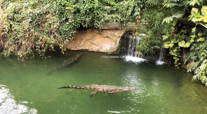 Visite de la ferme aux crocodiles à Pierrelatte