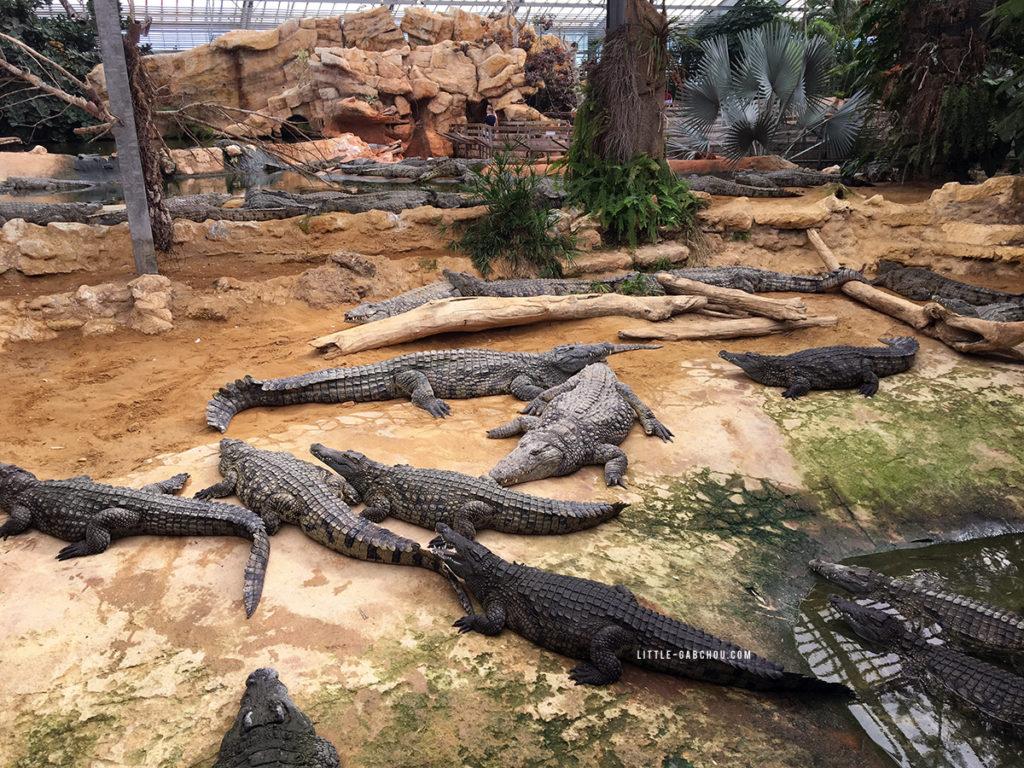 la ferme aux crocodiles parc animalier des reptiles