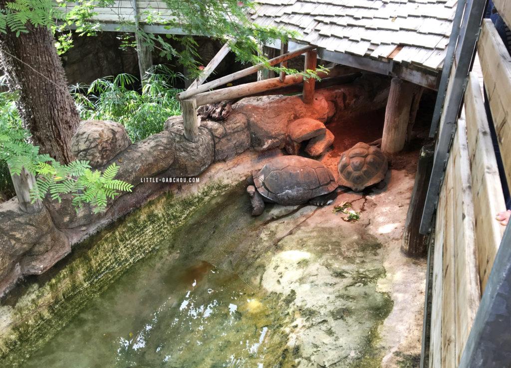 tortues et autres animaux dans la ferme aux crocodiles