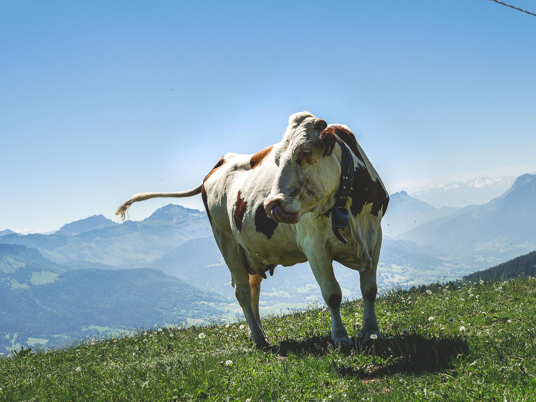 Que faire à Annecy en été: la montagne de Semnoz