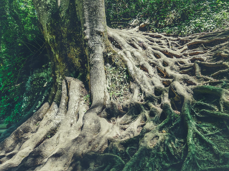 les gorges du Fier des lieux à visiter près d'Annecy