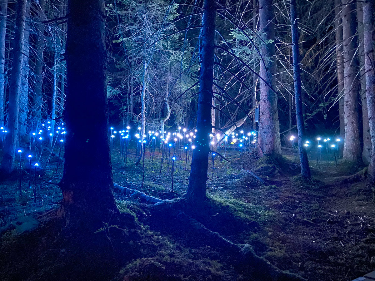 Avis spectacle lumières Alta Lumina des Gets dans les Alpes