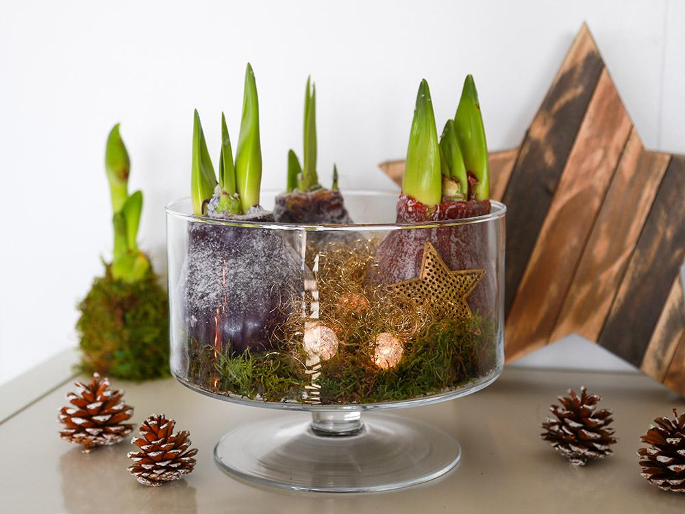 DIY: couronne de Noël avec des bulbes d'amaryllis