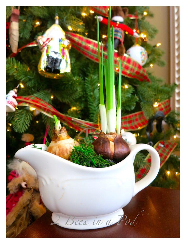 Idées de décorations de Noël avec des bulbes de fleurs