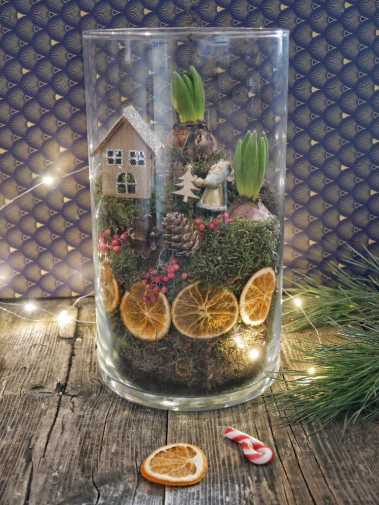 Création de terrarium de Noël avec des oranges séchées et bulbes de fleurs