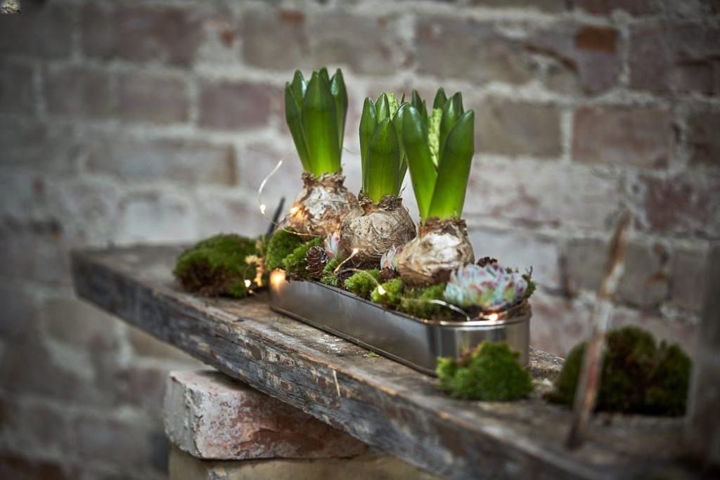 Décorations pour les fêtes de fin d'années avec des bulbes de fleurs